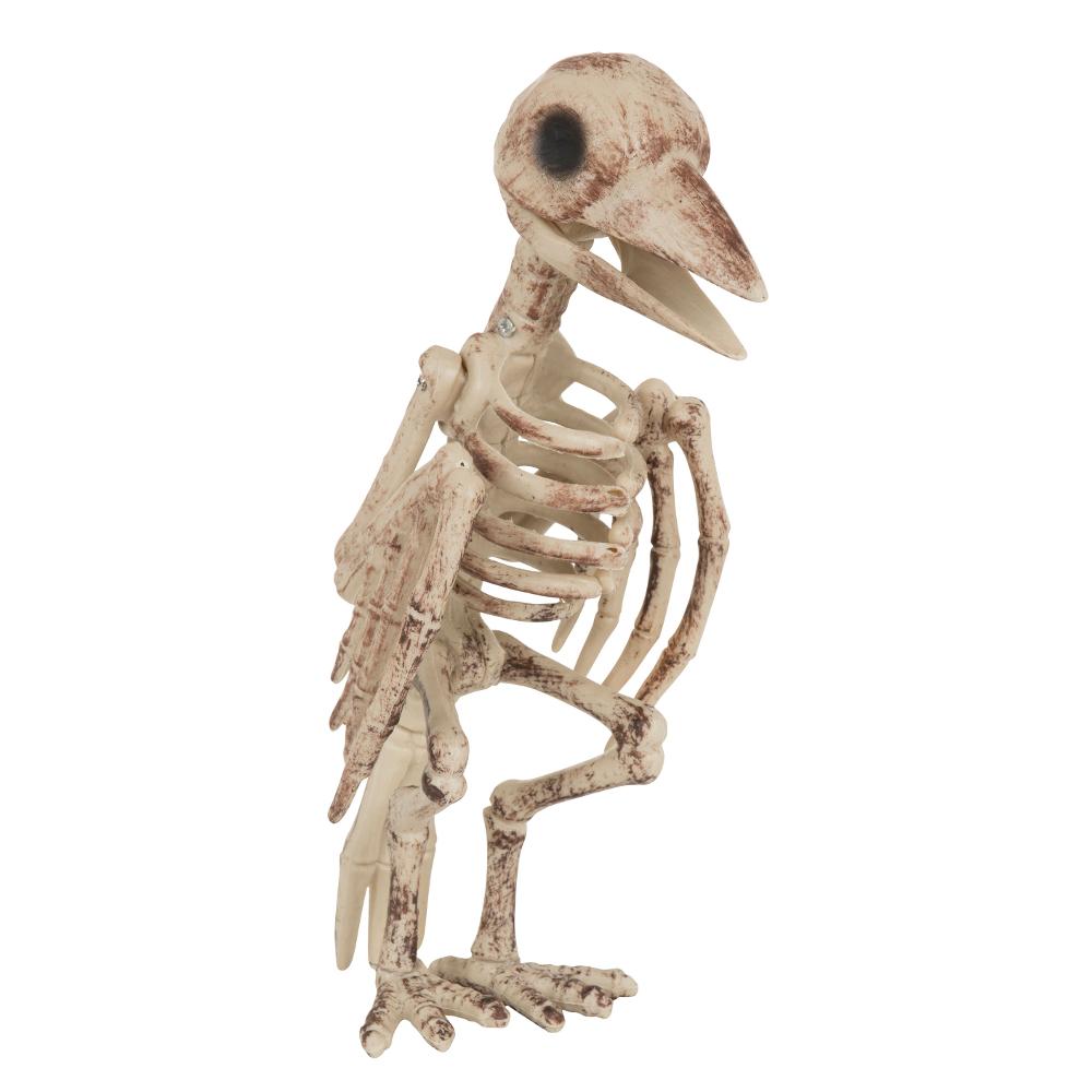 скелеты птиц фото что
